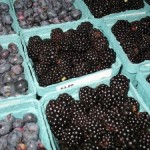berries-westport-winery-300x225